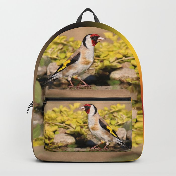 European Goldfinch At Sunset Backpack
