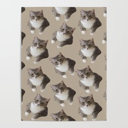 beige tan grey american wirehair cat pattern Poster