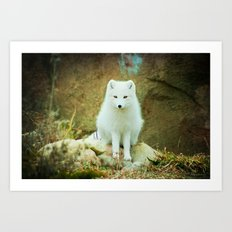 Snow fox Art Print