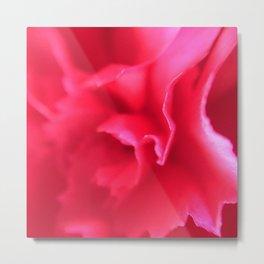 Pink Carnation 1 Metal Print
