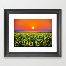 Sunflower Haze Framed Art Print