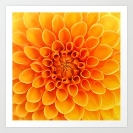 Orange Dahlia... Art Print