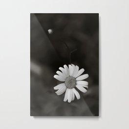 Daisy in Tintype Metal Print