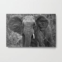 Elephant Charge Metal Print