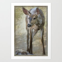 Doe Timidly Moving Past Art Print