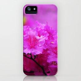 Azaleas in Keukenhof Botanical Garden. Netherlands iPhone Case
