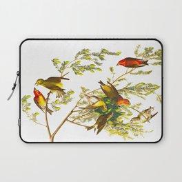 American Crossbill John James Audubon Vintage Scientific Hand Drawn Illustration Birds Laptop Sleeve