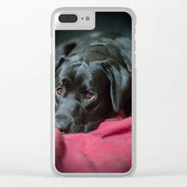Black Labrador Clear iPhone Case