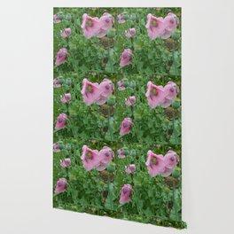 Poppies in rain Wallpaper