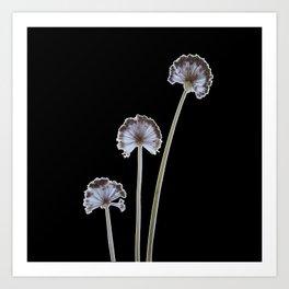 three flowers on black background Art Print