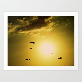 Sunset at Clearwater Art Print