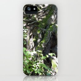 Roots and a tree 1 iPhone Case