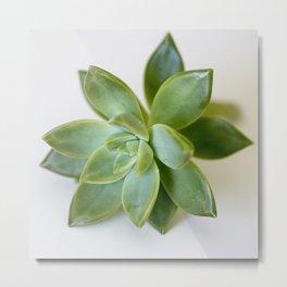 Glossy Green Succulent Metal Print