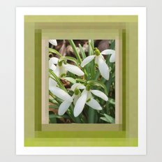 Spring Snowdrops Art Print