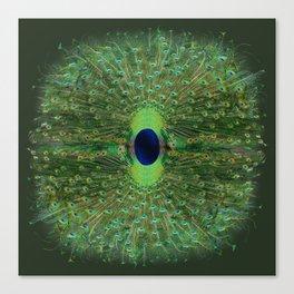 Peacock Wheel Canvas Print