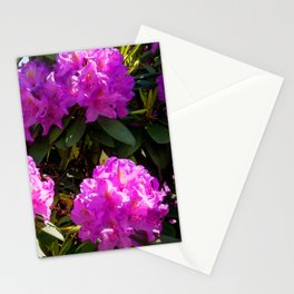 Amazing Garden pics- 917 Stationery Cards