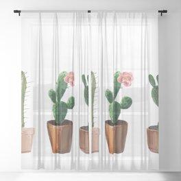 Three Cacti On White Background Sheer Curtain