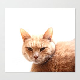 Red cat watching Canvas Print