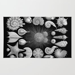 Sea Shells and Starfish (Thalamophora) by Ernst Haeckel Rug