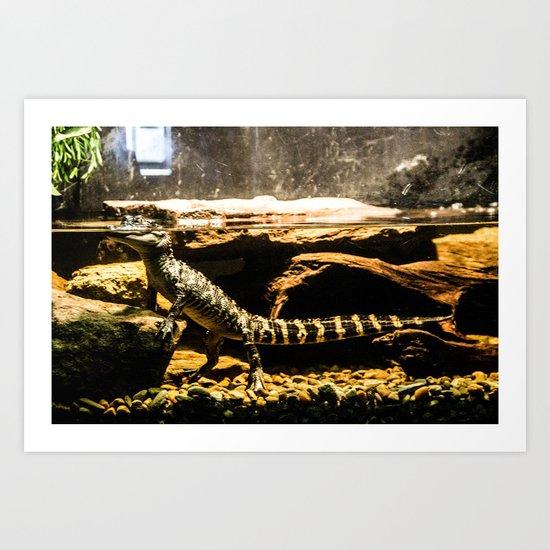 An America Alligator Art Print
