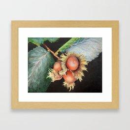 Filbert Framed Art Print