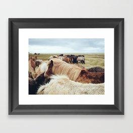 Icelandic Horses IV Framed Art Print