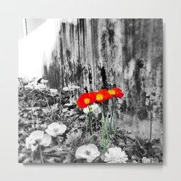 Poppies & Concrete Metal Print