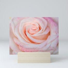 Pink Rose close up Mini Art Print