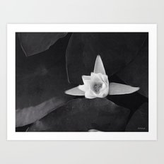 lilly black and white Art Print