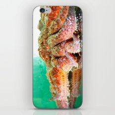 Sunflower Sea Star iPhone Skin