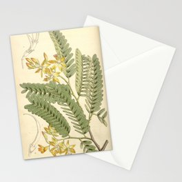 Flower 4563 tamarindus officinalis Tamarind tree1 Stationery Cards