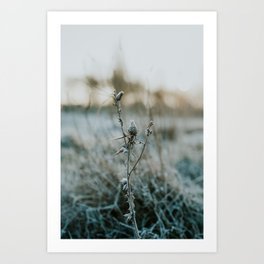 Frosted Thistle Art Print