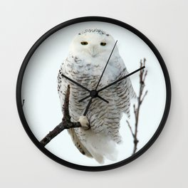 Snowy in the Wind (Snowy Owl 2) Wall Clock