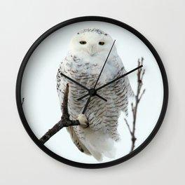 Snowy in the Wind (Snowy Owl 2) Wall Clock