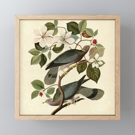 Band-tailed Pigeon (Patagioenas fasciata) Framed Mini Art Print