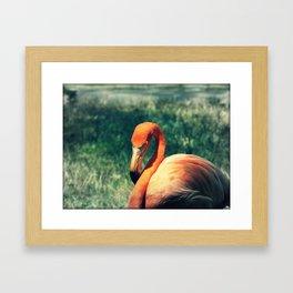 Flo the Flamingo Framed Art Print