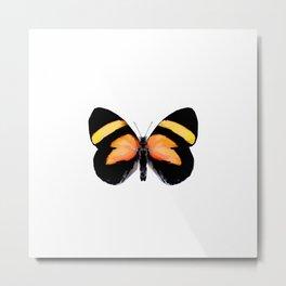 Tropical Orange Butterfly Painting Metal Print
