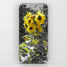 Sunflower 1 iPhone & iPod Skin