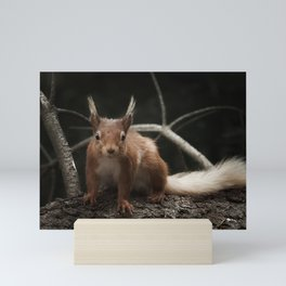 Cheeky red squirrel Mini Art Print