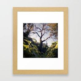 Old Tree, Color Film Photo Framed Art Print