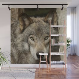 The intensity of the timber wolf Wall Mural
