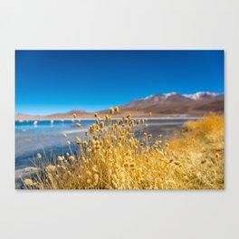 The Contrasting Landscape of Laguna Colorada Canvas Print