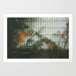 Orange life Art Print