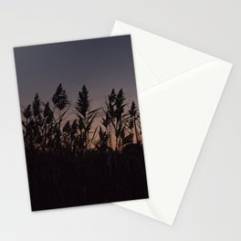 Phragmites silhouette at sunset Stationery Cards