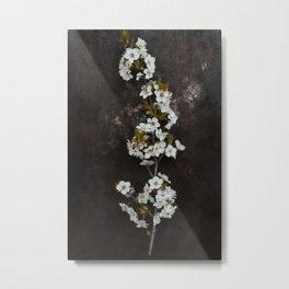 Cherry Blossom on black  Metal Print