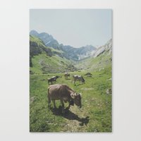 cows Canvas Prints featuring cows by remo