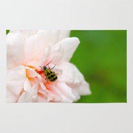 Cucumber Beetle & Winter Rose Rug