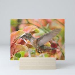 Little Ms. Hummingbird in for More Licks Mini Art Print
