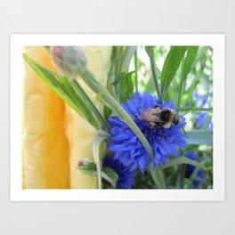 Cornflower Bee Art Print
