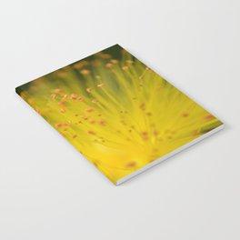 Yellow Chrysanthemum Notebook